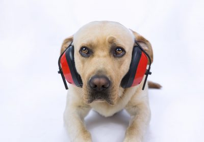 Noise Phobia in Dogs | Fireworks… Oh My!