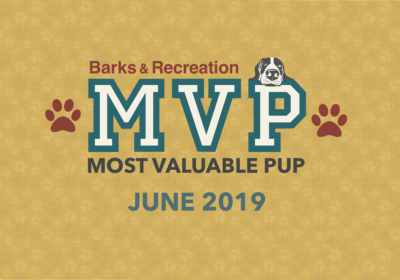 Barks & Recreation Most Valuable Pups (MVPs) — June 2019