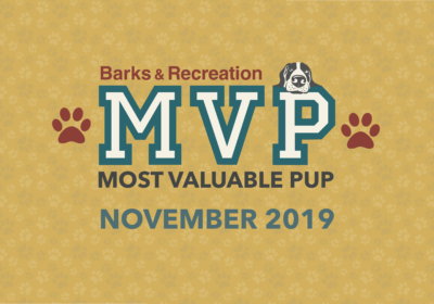 Barks & Recreation Most Valuable Pups (MVPs) — November 2019