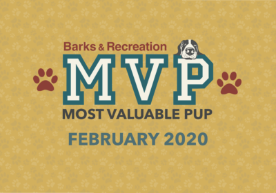 Barks & Recreation Most Valuable Pups (MVPs) — February 2020