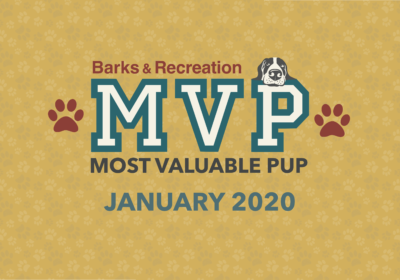 Barks & Recreation Most Valuable Pups (MVPs) — January 2020